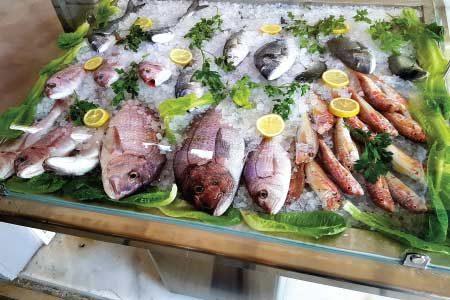 Μεγάλη ποικιλία απο φρέσκα θαλασσινά & Μαλάκια & Όστρακα!!